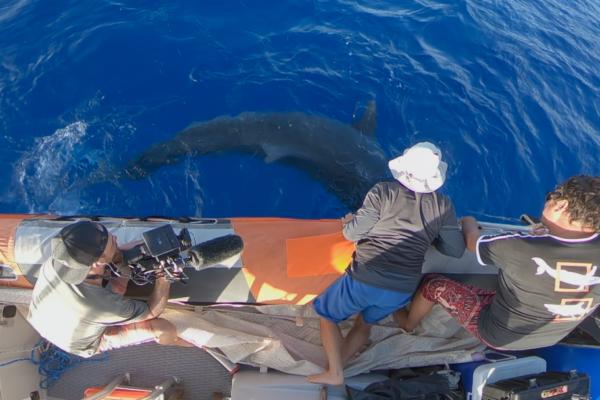 Bleu ocean les requins le doc